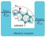 olfactory-receptor-300x246